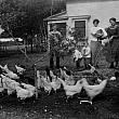 Family Farm with Chickens