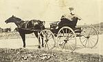 Bob VanHammen Driving a Horse and Carriage