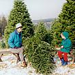 Cutting a Christmas Tree at a Tree Farm