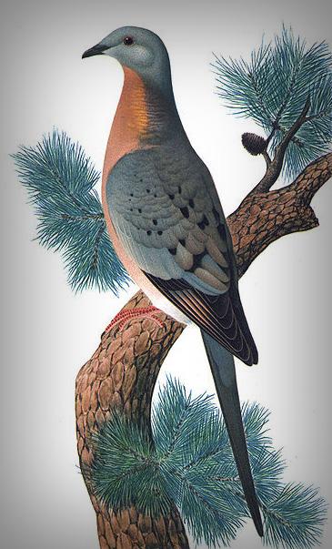 essays on pigeon feathers